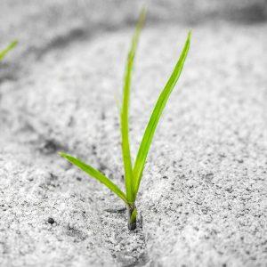 grass-800