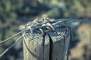 wire-1869729_1920w800